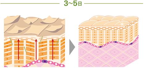 ハーバル シーの作用3〜5日